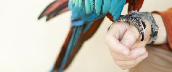 Parrots and Veterans Heal One Another at Serenity Park | Dustin DeMoss